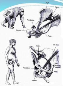 canal de part en ximpanse i en dona, 2